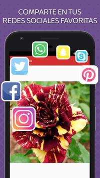 Rosas de Colores para Enamorar screenshot 3