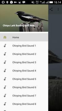 Chirps Lark Bunting Bird New poster