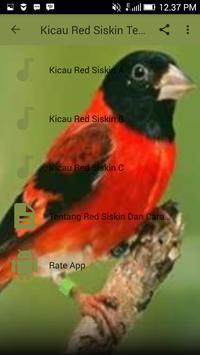 Kicau Red Siskin Terbaru For Android Apk Download