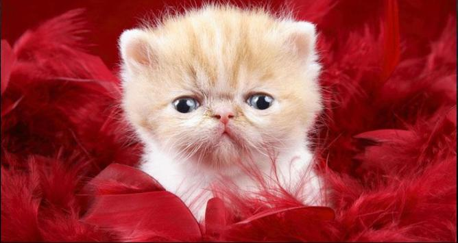 Cat Wallpapers: Cats, Cats Pictures, Cat Images screenshot 4