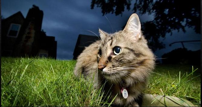Cat Wallpapers: Cats, Cats Pictures, Cat Images screenshot 5