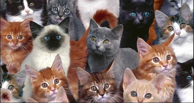 Cat Wallpapers: Cats, Cats Pictures, Cat Images screenshot 6