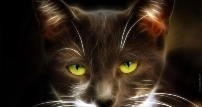 Cat Wallpapers: Cats, Cats Pictures, Cat Images screenshot 7