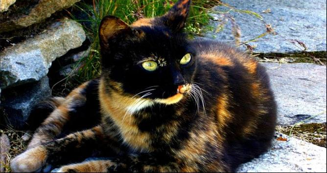 Cat Wallpapers: Cats, Cats Pictures, Cat Images screenshot 8