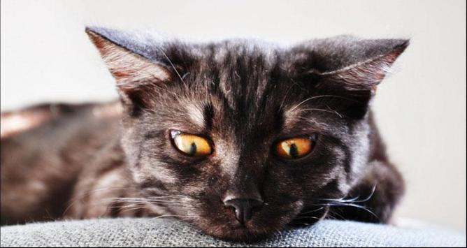 Cat Wallpapers: Cats, Cats Pictures, Cat Images screenshot 9