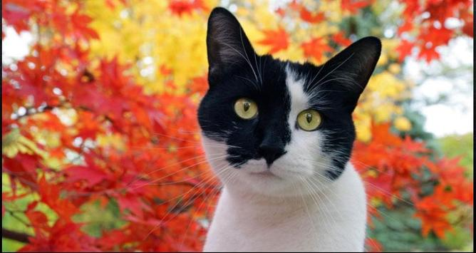 Cat Wallpapers: Cats, Cats Pictures, Cat Images screenshot 2
