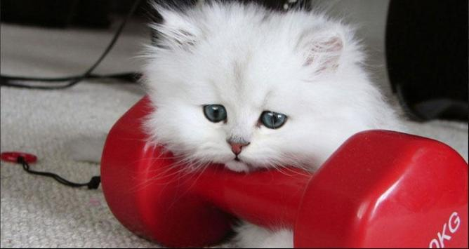 Cat Wallpapers: Cats, Cats Pictures, Cat Images screenshot 3