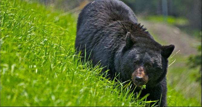 Bear Wallpapers: Bear Images, Free Bear Pictures screenshot 3