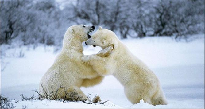 Bear Wallpapers: Bear Images, Free Bear Pictures screenshot 1