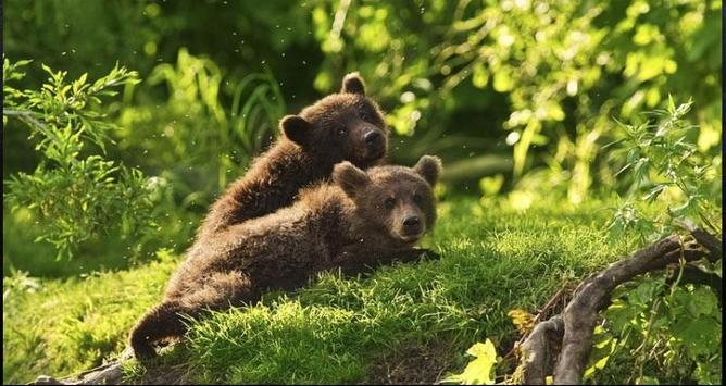 Bear Wallpapers: Bear Images, Free Bear Pictures screenshot 4