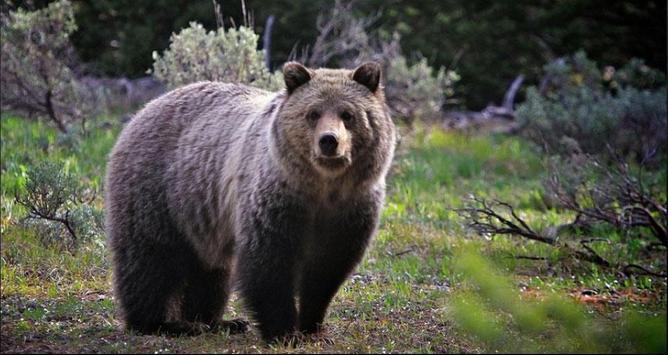 Bear Wallpapers: Bear Images, Free Bear Pictures screenshot 5