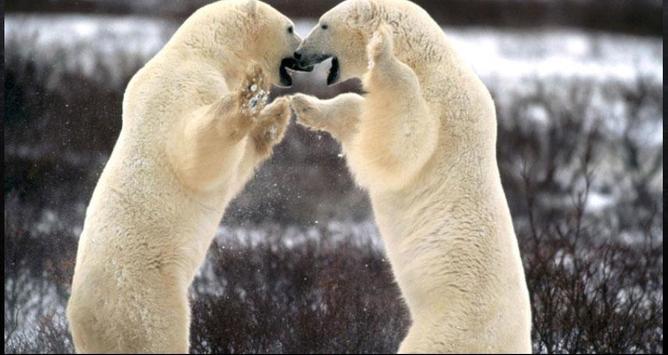 Bear Wallpapers: Bear Images, Free Bear Pictures screenshot 6