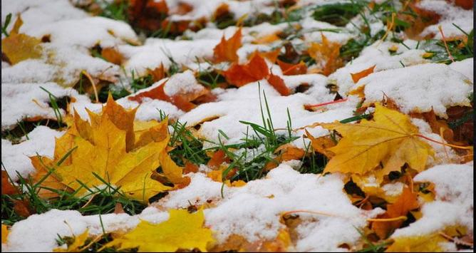 Nice Winter Pictures: Nature Themes, Winter images screenshot 7