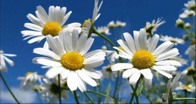 Flower Wallpapers: Nice Flower, Nature Backgrounds poster