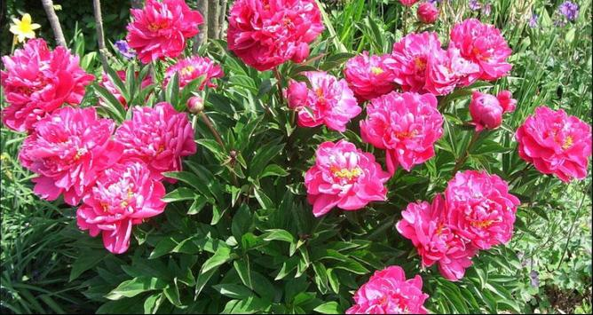 Flower Wallpapers: Nice Flower, Nature Backgrounds screenshot 1