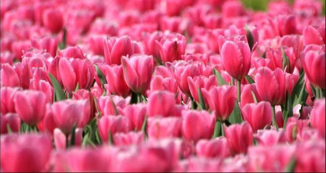 Flower Wallpapers: Nice Flower, Nature Backgrounds screenshot 2