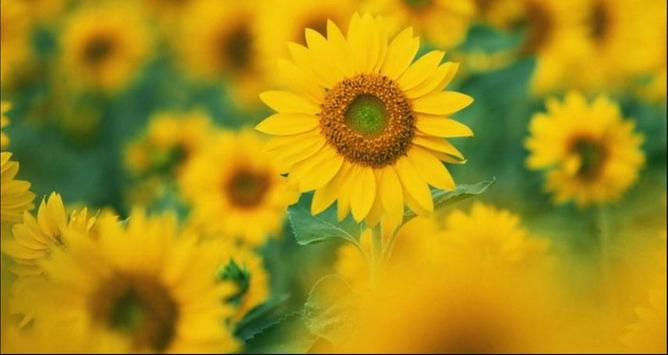 Flower Wallpapers: Nice Flower, Nature Backgrounds screenshot 3
