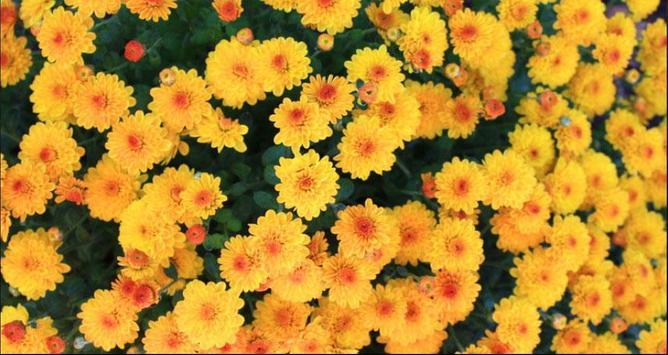 Flower Wallpapers: Nice Flower, Nature Backgrounds screenshot 4