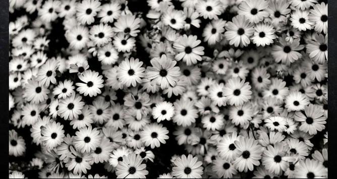 Flower Wallpapers: Nice Flower, Nature Backgrounds screenshot 7