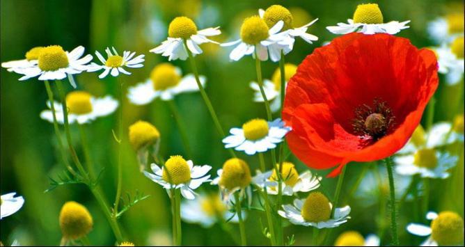 Flower Wallpapers: Nice Flower, Nature Backgrounds screenshot 8