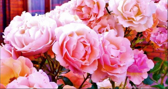 Flower Wallpapers: Nice Flower, Nature Backgrounds screenshot 9