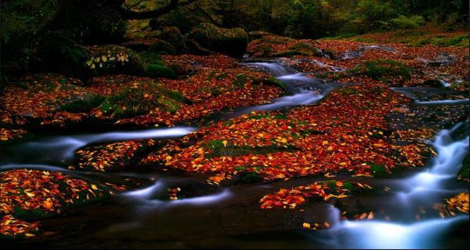 Stream Wallpapers: Stream Images, Natural Pics screenshot 5