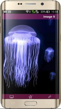 Jellyfish Wallpapers HD apk screenshot