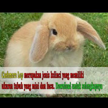 Budidaya Jenis Jenis Kelinci apk screenshot