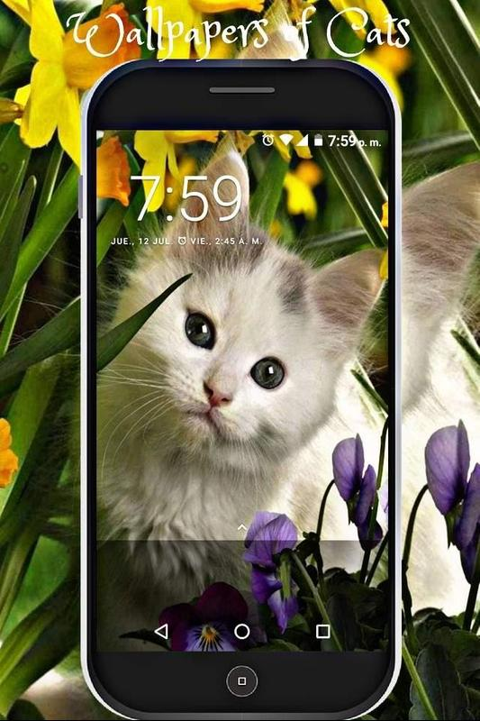 Fondos De Pantalla De Gatitos Tiernos Hd Adorables For Android Apk