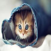 cats HD icon