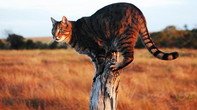 cats HD apk screenshot