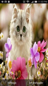 Cute Cat Live Wallpaper poster