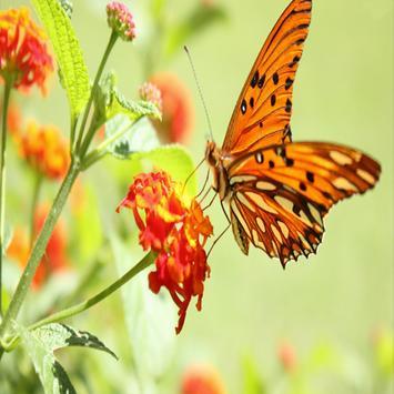 Butterfly Live Wallpaper screenshot 7