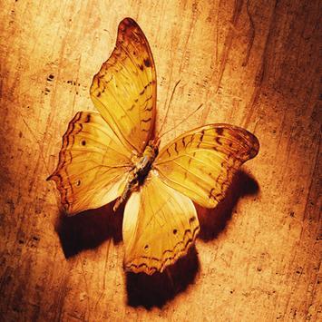 Butterfly Live Wallpaper screenshot 1