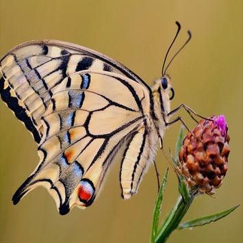 Butterfly Live Wallpaper screenshot 3