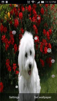 Puppy Live Wallpaper screenshot 2