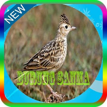 Kicau Burung Sanma Master Mp3 Offline poster
