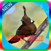 Masteran Burung Cililin Ngerol icon