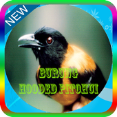 Masteran Burung Hooded Pitohui Mp3 icon