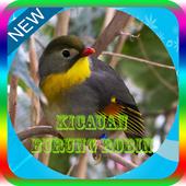 Masteran Burung Robin Offline icon