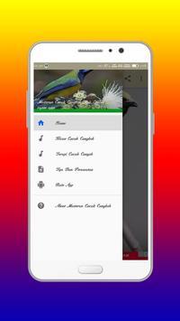 Masteran Cucak Cungkok Mp3 Offline screenshot 2