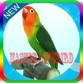 Master Kicau Lovebird Panjang Mp3 icon