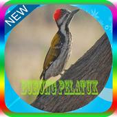 Ocehan Burung Pelatuk Mp3 icon