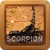 Emperor Scorpion Wallpapers icon