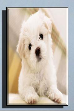 Cute Dog Wallpapers screenshot 3
