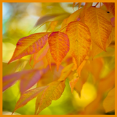 Warm Autumn Live Wallpapers icon