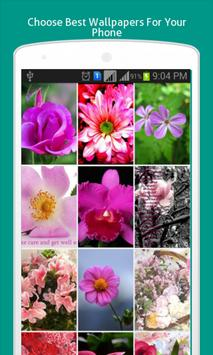 Pink Flowers Wallpapers HD poster