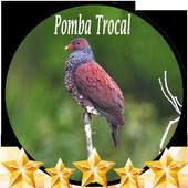 Canto de Pomba Trocal icon