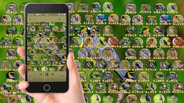 Sanhaco De Coleira screenshot 3
