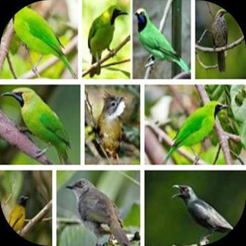 999+ Suara Kicau Burung Pemikat Juara Mp3 Offline poster
